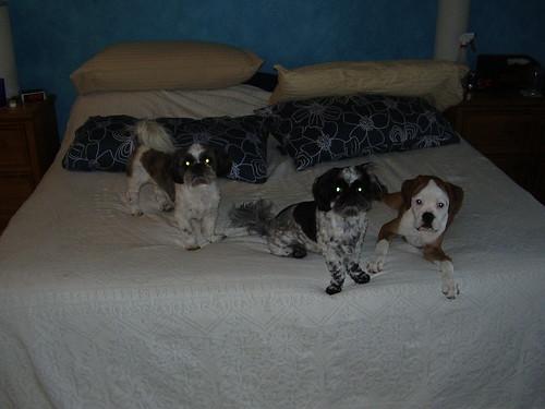 Rocky, Athena, and Daisy