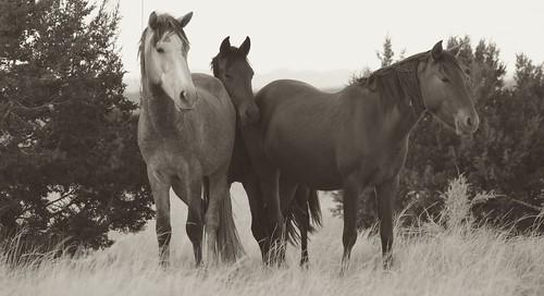 NM Wild Horses nwm (19)