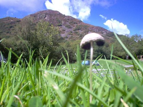 tiny mushroom!