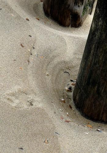 Entdeckungen am Strand