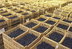 Producer Profile - Allegrini (Amarone)