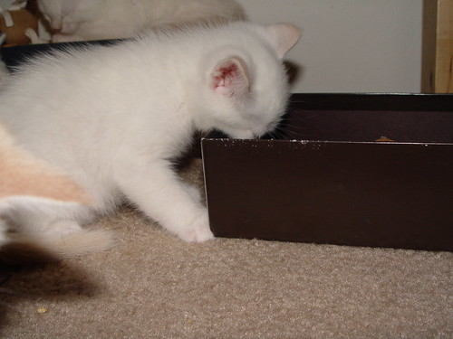 Chewing on the box.