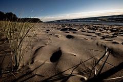 Beach Grasses by Arace