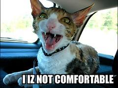 Storasyster katt som LOLcat