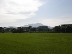 20.關渡平原的稻田與觀音山 (1)