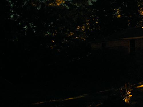 Fireflies 4