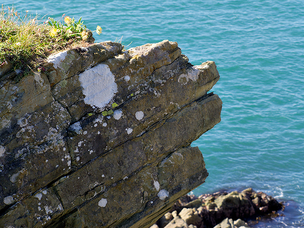 cliff creature 2
