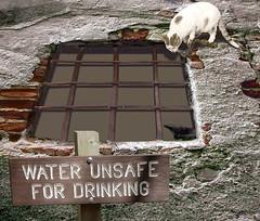 Qué hay en el agua que bebe?