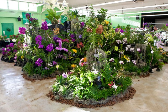 Kunia Orchid Society Display (2010 HOS Show)