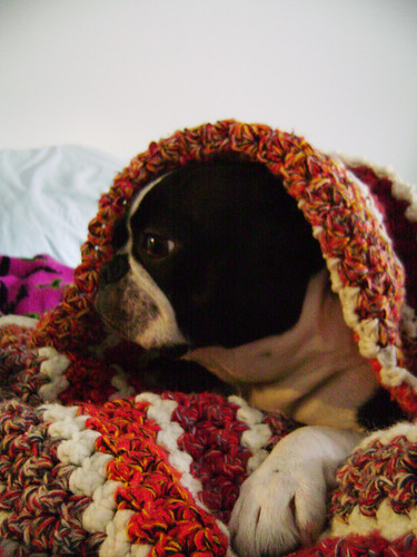 Iggy Pup