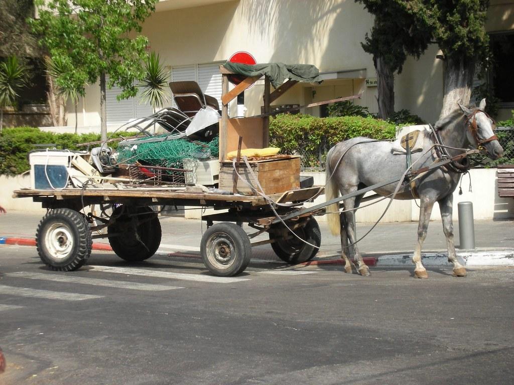 סוס אלטה זאכן