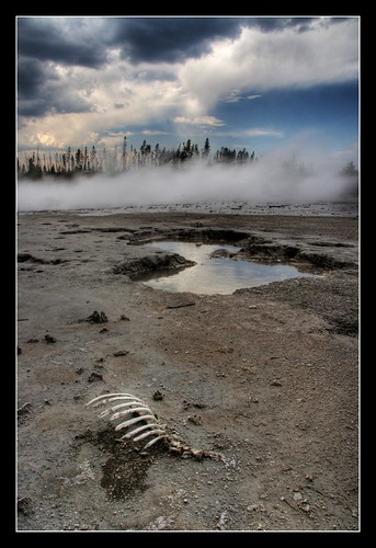 Yellowstone Skeletal Remains