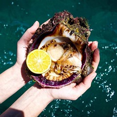 Day 296. Busy day of exploring yesterday. We took a boat ride out to a secluded beach then went snorkeling. Our guide came out of the water with this scallop, which was probably the best thing I've ever tasted. #theworldwalk #travel #costarica