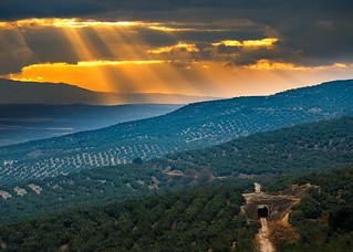 Atardecer en olivares - Úbeda (Jaén)