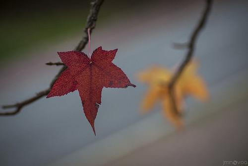 Outono - de José Manuel Nóvoa