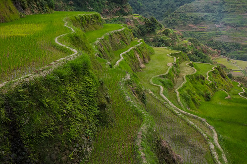 Green squiggles. Banaue