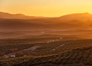 Aterdecer en un mar de olivos - Úbeda (Jaén)