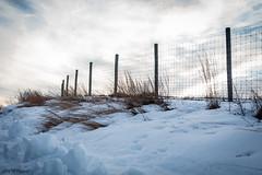 Winter Wisp