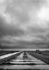 Rural Holland in January V