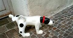 """Das Bein heben. Der Hund hebt das Bein. Die Hunde heben die Beine. • <a style=""""font-size:0.8em;"""" href=""""http://www.flickr.com/photos/42554185@N00/25588736742/"""" target=""""_blank"""">View on Flickr</a>"""