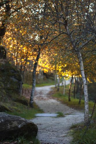 Outono - de Esther Mosquera