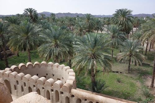 Depuis le fort, s'étend une palmeraie (culture des dattes)