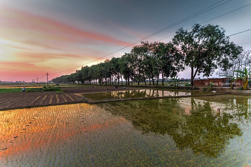 "Dramatic and colorful sunset over the rice plantation • <a style=""font-size:0.8em;"" href=""http://www.flickr.com/photos/132142211@N05/25903974916/"" target=""_blank"">View on Flickr</a>"
