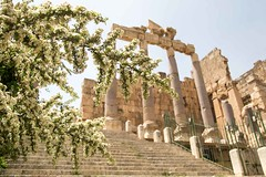 flowers at Baalbeck entrance