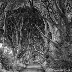 The Dark Hedges Ierland