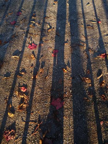 Outono - de Araxiel Dóyel
