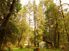 Epa replaces reference to old e 2247 standard to reflect 2016 revisions. Forestland Definition And Meaning