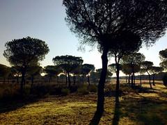 Iberian Magpie landscape
