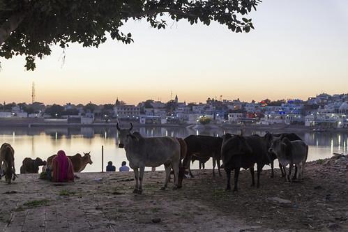 Pushkar - Sonnenuntergang am heiligen See
