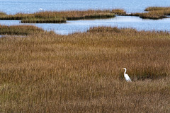 Galveston State Park