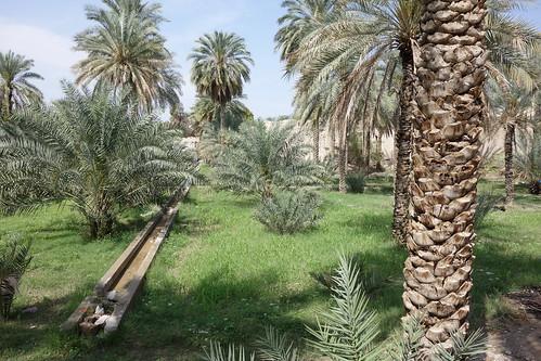Un système d'irrigation délivre l'eau aux palmiers