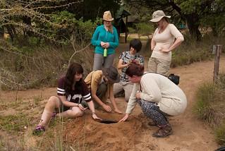 Ukuwela Conservancy volunteers building pit trap