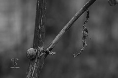 IsaStewart-nature-20151206-5891