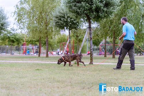 FotoBadajoz-7376