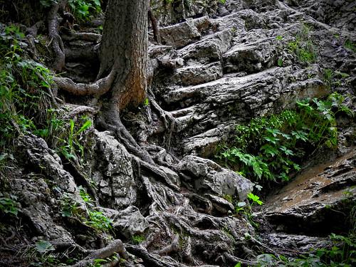 Roots Rocks Forest / Gyökerek Sziklák Erdő