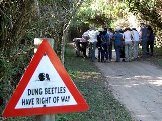beetlesign