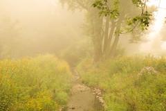 creek in mist