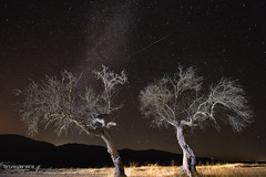 Perseids Meteor Shower in Alqueva