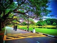 Jalan Pekeliling, Taman Tasik Taiping, 34000 Taiping, Negeri Perak https://goo.gl/maps/tpFzayvYbxB2 #travel #holiday #trip #traveling #旅行 #度假 #亞洲 #Asian #馬來西亞  #여행 #ホリデー #휴일 #праздник #путешествие #วันหยุด #การเดินทาง #park #公園 #パーク #สวนสาธารณะ #парк #공원