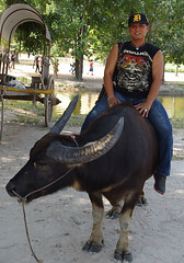 """Man on buffalo • <a style=""""font-size:0.8em;"""" href=""""http://www.flickr.com/photos/23163398@N00/42882908150/"""" target=""""_blank"""">View on Flickr</a>"""