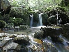 El bosque encantado de Carlac