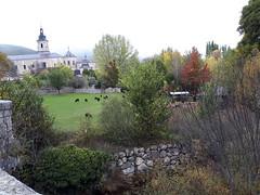 Marcha de Senderismo Valle del Lozoya Alto Madrid  Fotografía Ima (22)