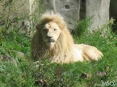 IMG_2510_Burgers_Zoo