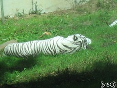 IMG_2645_Burgers_Zoo