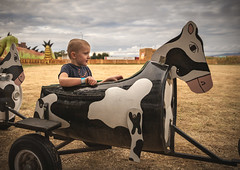 Day 334 | Cow Train