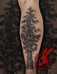 Pine Tree Realistic Black and Grey Real 3D Tattoo by Jackie Rabbit